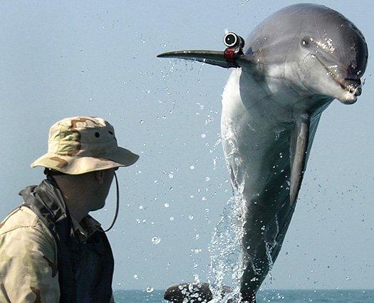 killer dolphin, spy, dolphin, russia